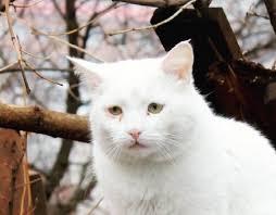Sad Cat Meme - create meme sad cat sad cat pictures meme arsenal com