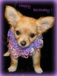chihuahua birthday card happy birthday chihuahua puppy dog