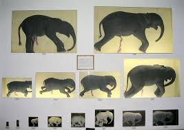 The Blind Men And The Elephant Analysis Elephants U0027 Aquatic Ancestors Just Below The Surface 42