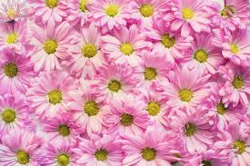 free stock photos of bunch of flowers pexels