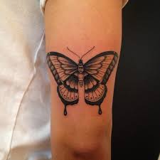 butterfly moth justin turkus philadelphia frequency