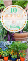 best 25 apartment gardening ideas on pinterest apartment plants