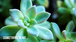 succulents meaning 100 succulents meaning best 25 spring meaning ideas only on