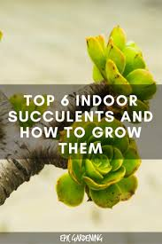 top 6 indoor succulents and how to care for them