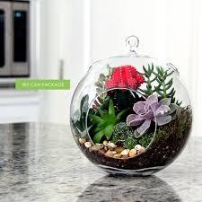 8 inches hanging glass terrarium succulent cactus moss indoor
