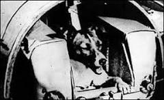 Cadela Laika morreu antes do que se acreditava no espaço | BBC ...