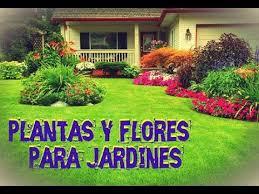 imagenes de jardines pequeños con flores plantas para jardines pequeños flores hermosas youtube