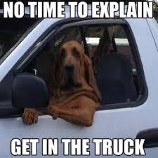 Dog In Car Meme - 9 best car memes images on pinterest funny images ha ha and