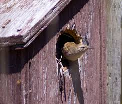 with birdhouses think inside home u0026 garden eugene oregon