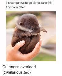 Otter Memes - 25 best memes about baby otter baby otter memes