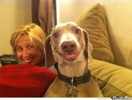 Dog Smiling Meme - dog smile for the camera by mustapan meme center