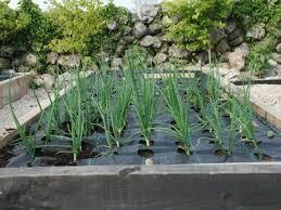 growgrid vegetable mats u0026 weed control fabric