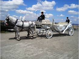 bianchi carrozze noleggio carrozze con cavalli bianchi per matrimoni ancona