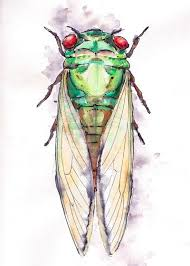 69 best cicada tattoo images on pinterest cicada tattoo insects