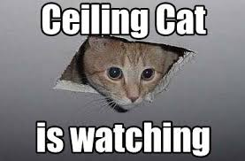 Internet Meme Cat - 10 of the web s most popular cat memes mnn mother nature network
