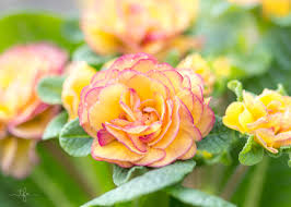 Flowers For Window Boxes Partial Shade - add a pop of color to your shade garden angie the freckled rose