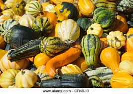 ornamental pumpkins stock photo royalty free image 63178003 alamy