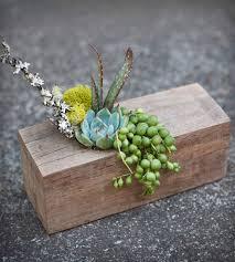 Unique Planters For Succulents by Planters For Succulents Home Design Ideas