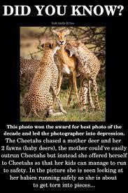 Oh Deer Meme - images cdn 9gag com photo a8o19ny 700b jpg