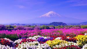 spring in japan wallpapers hd free download pixelstalk net
