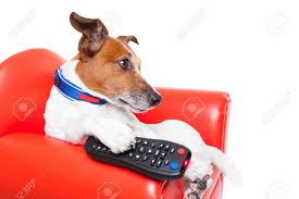 dog watching tv or a movie sitting on a red sofa or couch with