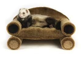 Ferret Hutches And Runs Ferret Furnishings How To Be Your Ferret U0027s Interior Designer