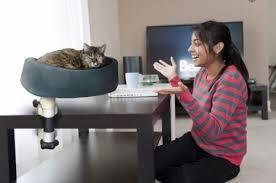 cat desk accessories make work fun the conscious cat