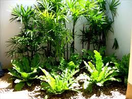 Small Tropical Garden Ideas Marvelous Tropical Landscaping Ideas Section 4 Tropical Garden
