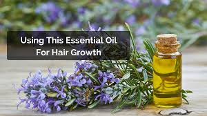 rosemary for hair growth images is rosemary oil effective for