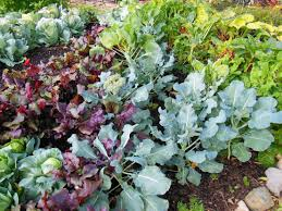midwest vegetable garden plants home outdoor decoration decor