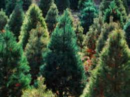 where to buy a tree in the cities southwest