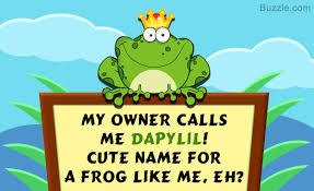 you u0027ll love these cute and funny names for your pet snake