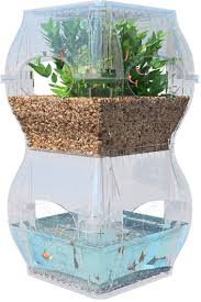 aqualibrium uses fish to grow plants and plants to grow fish