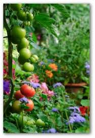 easy container garden ideas plans and video