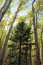 Christmas Tree Permits Colorado Buffalo Creek by Arizona Hiking 9 25 11 10 2 11