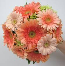 Ideas For Gerbera Flowers Wedding Ideas Coral Weddingts Ideas Phenomenal Picturet Of