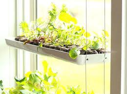 Herb Garden Winter - grow an herb garden indoors easiest herbs to grow indoors growing