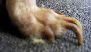 trimming really long dog nails cameleon nail polish