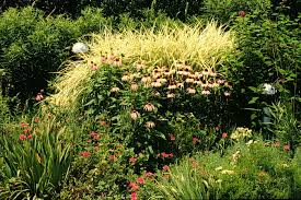 an introduction to ornamental grasses and grasslikes for southern