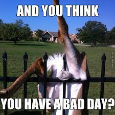 Bad Day Meme - and you think you have a bad day by lady gaga meme center