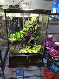 83 best terrariums u0026 vivariums images on pinterest dart frogs