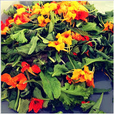 nasturtium flowers nasturtiums flowers information recipes and facts