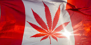 canada eyes plan to legalize marijuana by 2018 lotus cannabis