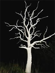 white tree essex in pictures a spooky tree by the a120