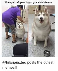 Cutest Memes - when you left your dog at grandma s house posts the cutest memes