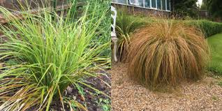 ashdown park hotel s tips for using ornamental grasses in your