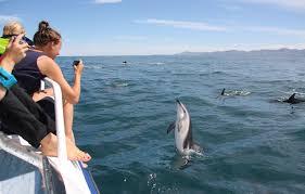 new zealand u0027s dolphin tales tourism new zealand media