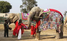 are knitting sweaters for rescue elephants travel