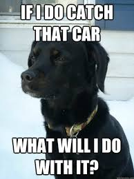 Dog In Car Meme - 13 dog philosophers reveal their deepest thoughts rover com