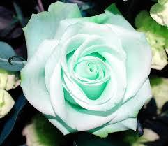 mint green flowers mint green green mint green and